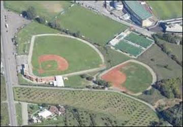 Baseball and Softball in Arezzo